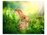 Cute Little Sunny Easter Bunny