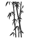Bamboo Stems Ink Sketch