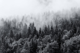 Misty Forests of Evergreen Coniferous Trees in an Ethereal Landscape with Low Laying Mist or Cloud