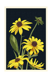 Black Eyed Susan - Letterpress