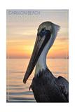 Carillon Beach  Florida - Pelican