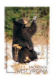 Snowshoe  West Virginia - Bear Playing with Snow