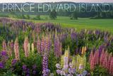 Prince Edward Island - Field of Flowers