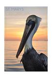 St Marys  Georgia - Pelican
