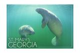 St Marys  Georgia - Manatees Underwater