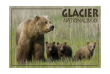 Glacier National Park - Grizzly Bear and Cubs