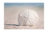 Prince Edward Island - Sand Dollar
