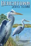 Beachtown - Jekyll Island  Georgia - Blue Herons