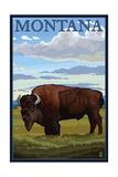 Montana - Bison Scene