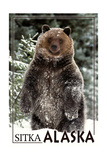 Sitka  Alaska - Bear Standing in Snow