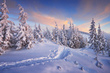 Fir Trees under the Snow Mountain Forest in Winter Christmas Landscape the Path in the Snow Car