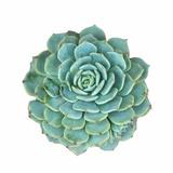 Miniature Succulent Plants Reproduction d'art par Kenny001