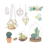Vector Set with Succulents  Flowers and Glass Terrariums