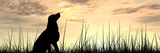 Concept or Conceptual Young Beautiful Black Cute Dog Silhouette in Grass or Meadow over a Sky at Su