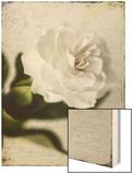 Gardenia Grunge II