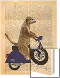 Meerkat on Dark Blue Moped