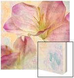 Pink Hyacinth II