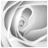 Rose Swirl I