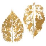 Gold Otono I (gold foil)