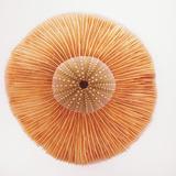 Ocean Finds I Reproduction d'art par Jairo Rodriguez