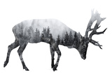 Forest - Deer - Silhouette