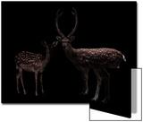 Deer  Dear