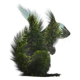 Forest - Squirrel - Silhouette Papier Photo