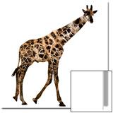 The Jaguar Patterned  Beautifully Confused Giraffe