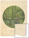 Old Masters  New Circles: Trees and Undergrowth  c1887