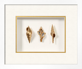 *Exclusive* Beachcomber Shell Trio Shadowbox - Gold