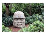 Olmec Head in a Forest