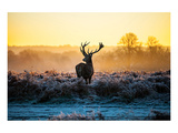 Red Deer At Dusk