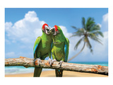 Severe Macaw Parrots on Beach