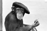 Artist Chimp 1955