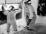 Circus Chimps 1954
