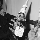 Sally the Dog at Annual Dogs Christmas Party in Bristol  1958