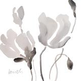 Tonal Magnolias II