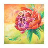 Beautiful Bouquet of Peonies II