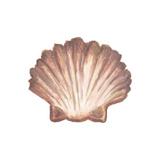 Coastal Icon Coral VI