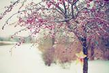 Winter Berries I