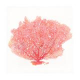 Watercolor Coral II Giclée premium par Jario Rodriguez