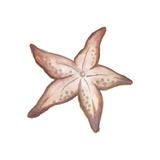 Coastal Icon Coral VII