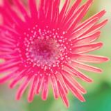 Pink Fun I