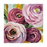 Ranunculus Rosa II