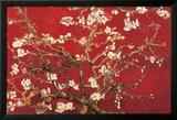 Almond Blossom - Red Affiche plastifiée encadrée par Vincent Van Gogh