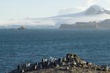 Chinstrap Penguins  Aitcho Island  Antarctica