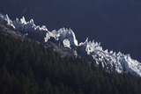 Glacier and Trees  Chamonix  Haute-Savoie  France