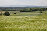 Landscape  Southern Burgenland  Austria