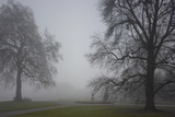 Royal Botanic Gardens  Kew  London Palm House Obscured by Fog with Winter Trees