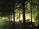 Trees at Bensheim  Staatspark Fã¼Rstenlager - Germany